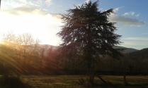 Enraciner dans un projet... ( Cet arbre vous y passez devant pour nous rejoindre !)